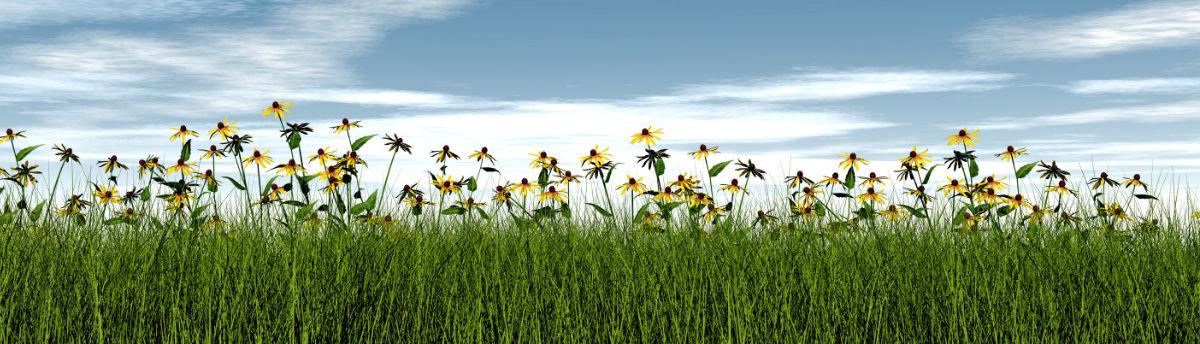 græs og blomster